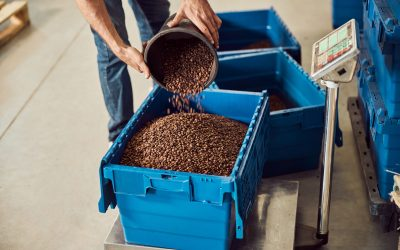 Young man filling storage box with roasted beans while standing near scales in warehouse and measuring weight of raw material